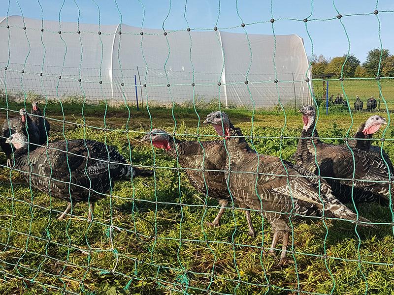 Organic Bronze Turkey